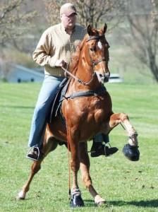 Аллюр. Виды походки лошади