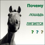 Почему лошадь лягается. Из жизни животных