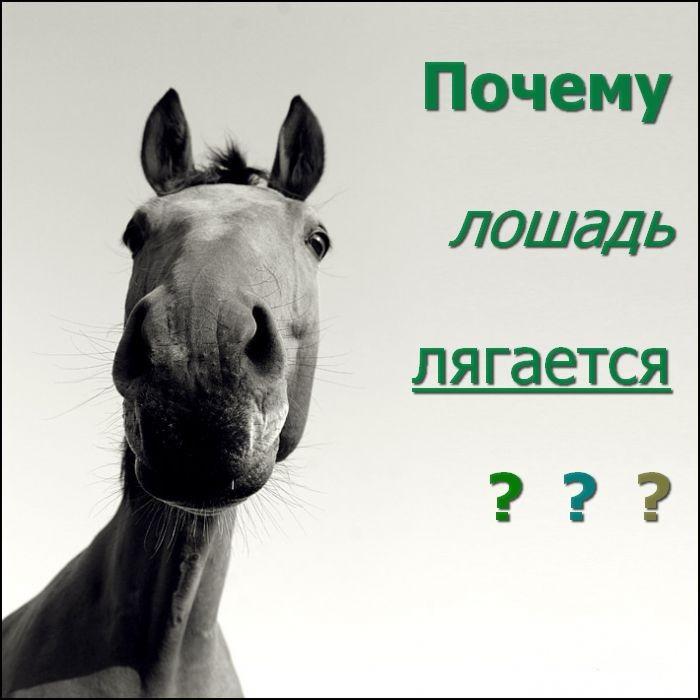 Лошадь лягается