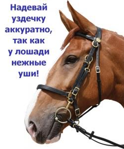 Верховая езда. Техника безопасности