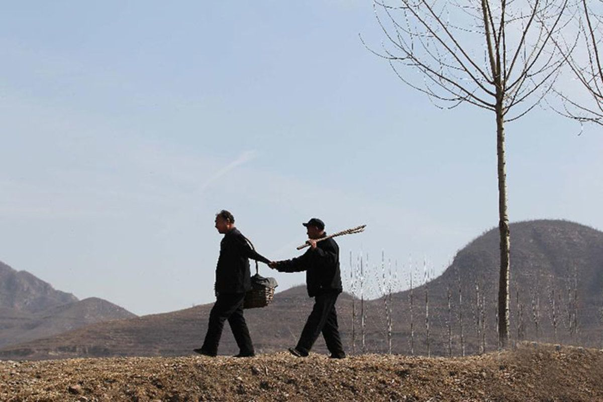 Как два Китайца посадили более 10000 деревьев