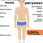 Тест на силу мышц. В рисунках