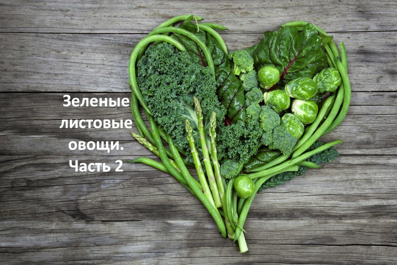Зеленые листовые овощи. Часть 2