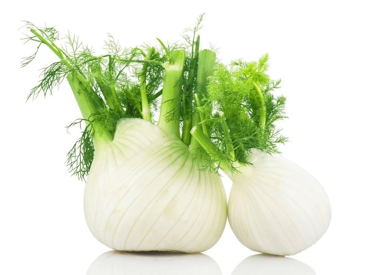 Зеленые листовые овощи Фенхель