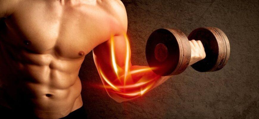 Регенерация и восстановление мышц