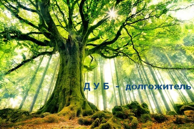 Какое дерево посадить