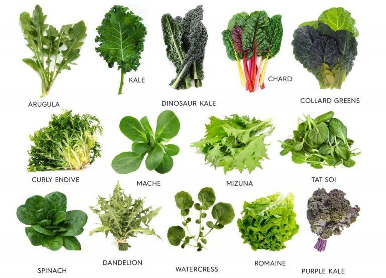 проведем виды листьев салата с названием очень древнее