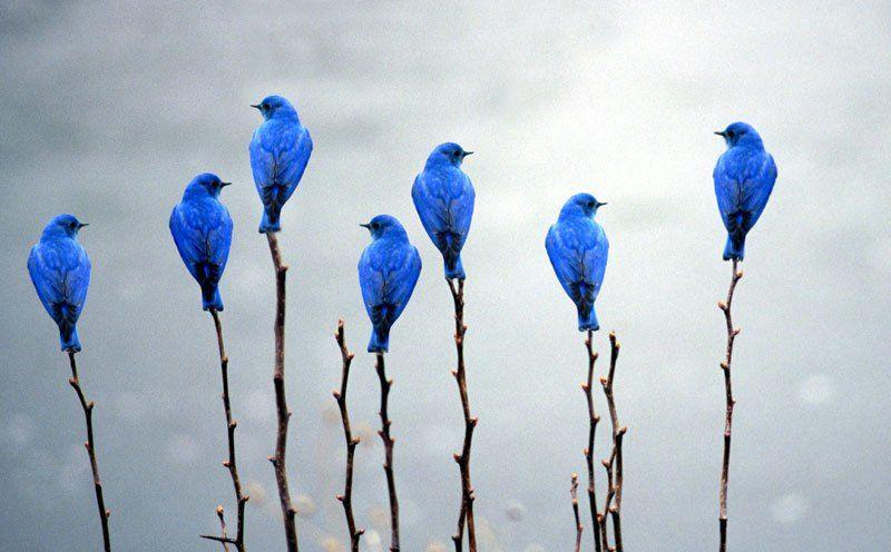 Минимализм в жизни. Как поймать свою птицу?