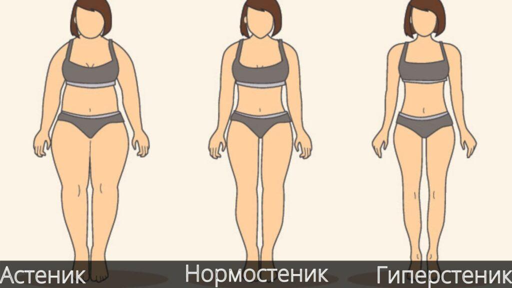 Типы телосложения 👫 – нормостеник